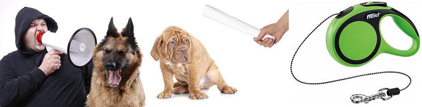 Что нельзя делать во время дрессировки собаки?