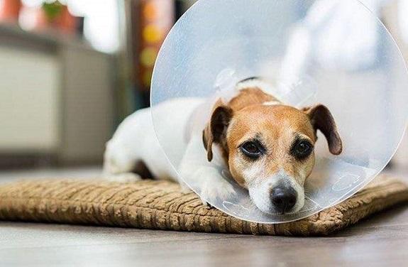 Елизаветинский защитный воротник для собак