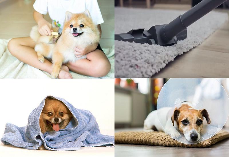 Как помочь собаке во время лечения?