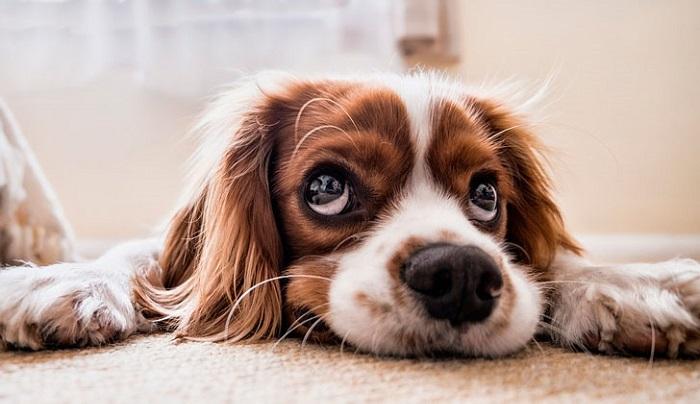 Как приучить взрослую собаку?