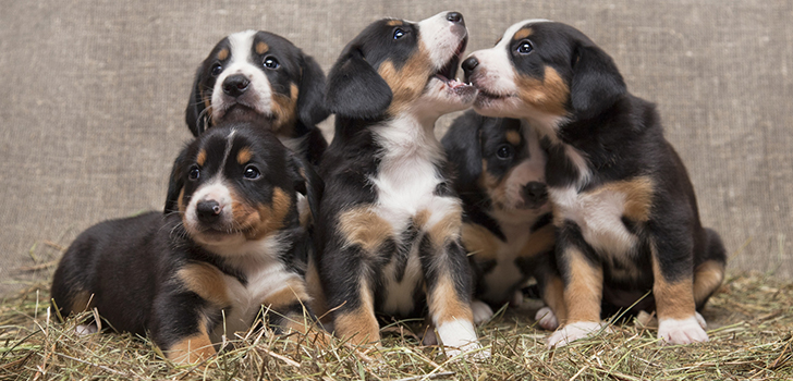 Как выбрать себе хорошего щенка из помета?