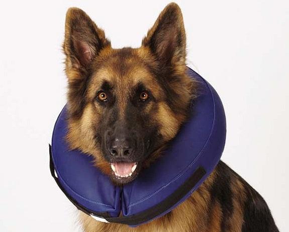 Надувной воротник для собаки