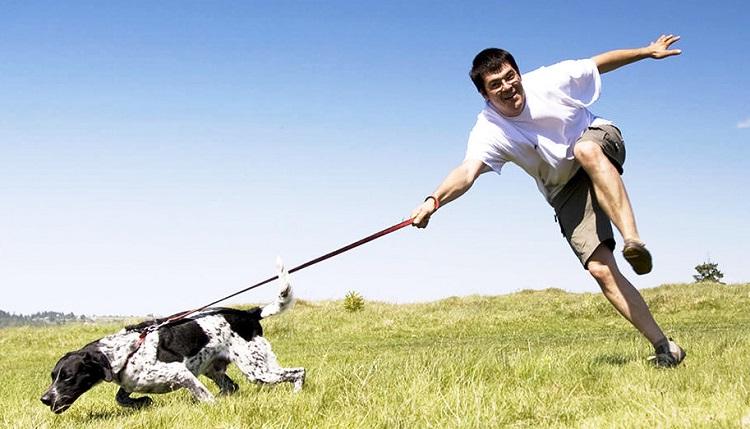 Ошибки со стороны хозяина собаки
