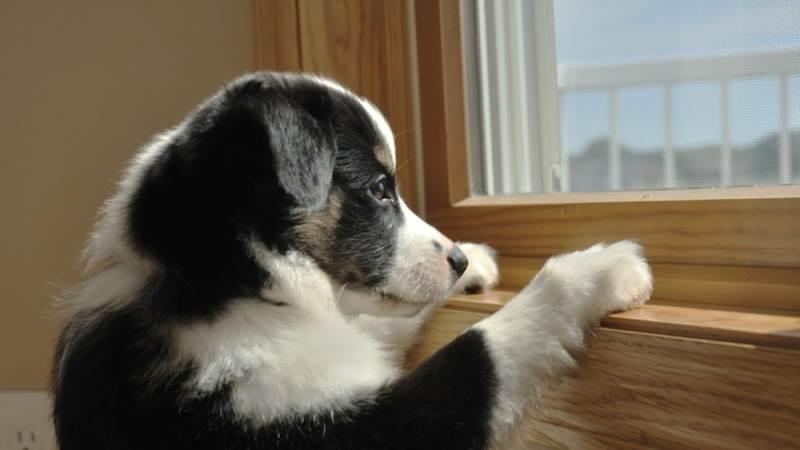 Почему собаки не любят оставаться дома одни?