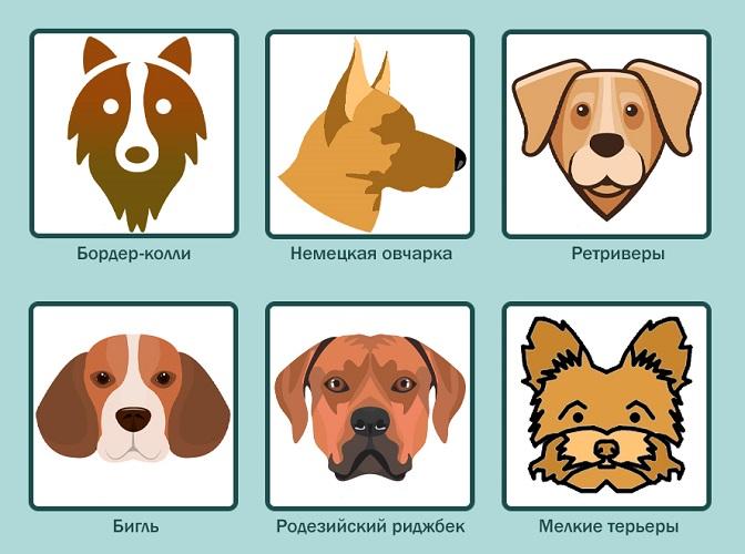 Породы собак, склонных к эпилепсии