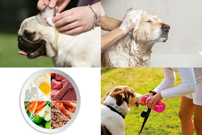 Профилактика ушных заболеваний у собак