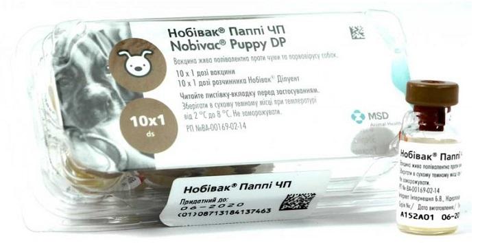 Puppy DP