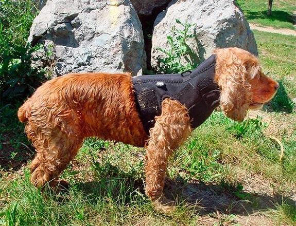 Шейный корсет для собаки
