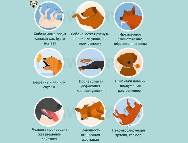 Симптомы эпилепсии у собак