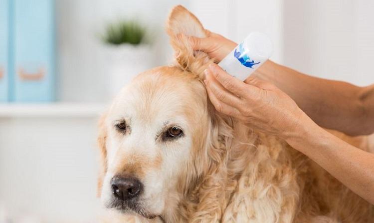 Закапать уши собаки лекарством