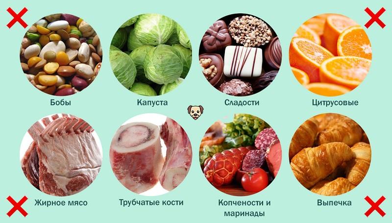 Чем нельзя кормить лабрадора?