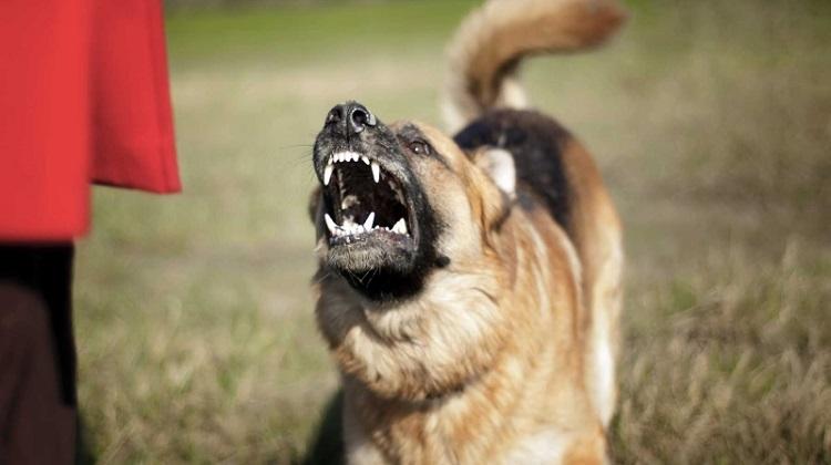 Что делать, если собака рычит на хозяина?