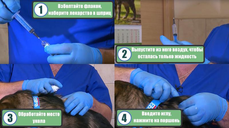 Инструкция по применению лекарства Дексафорт для собак