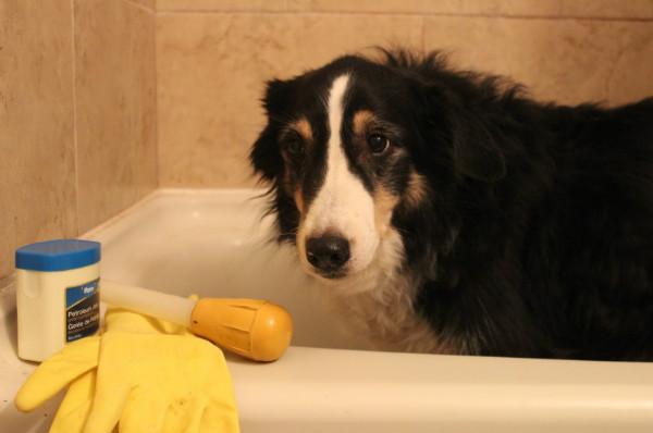 Как сделать клизму собаке дома?