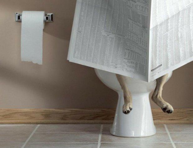 Обустройство туалета для собаки в квартире