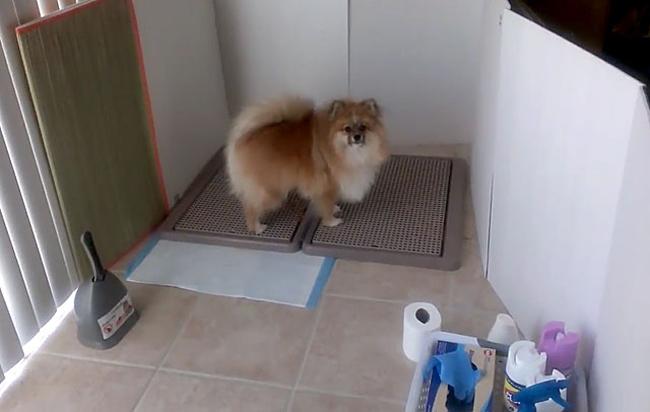 Обустройство туалета для собаки
