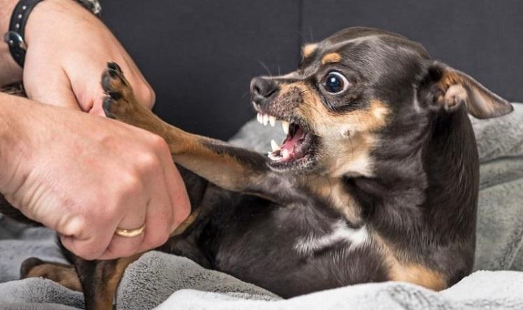 Почему собака начинает доминировать?