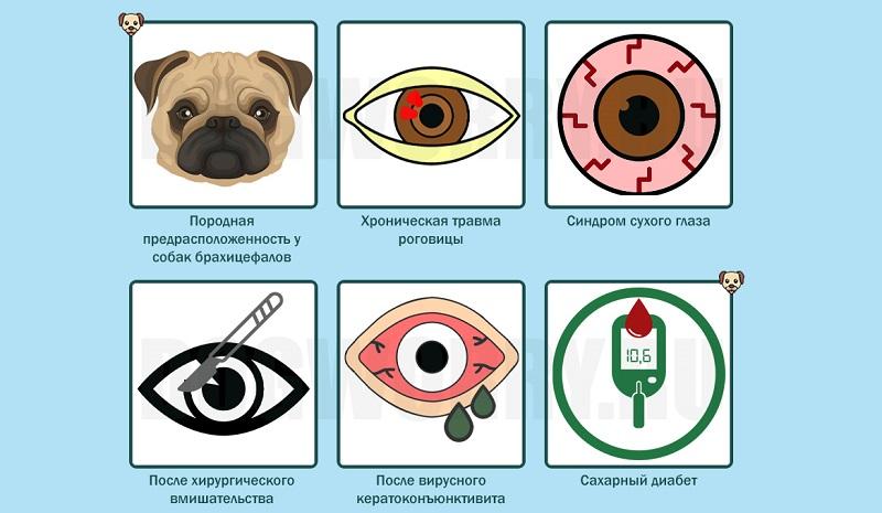 Причины кератита у собак