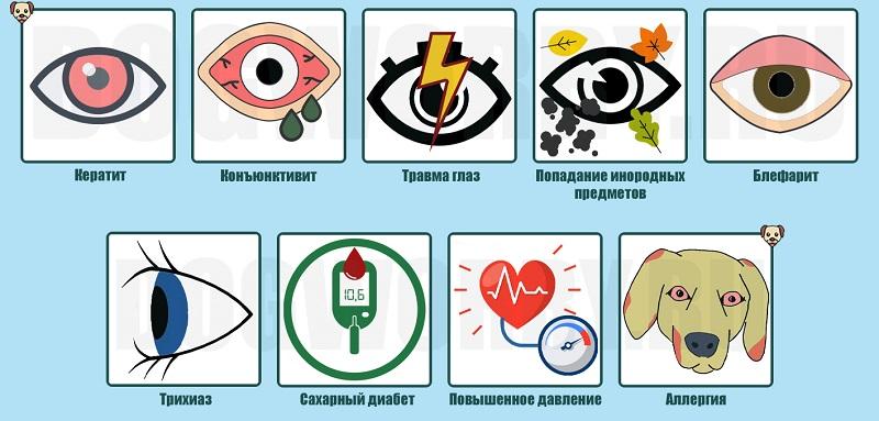 Причины красных глаз у собак