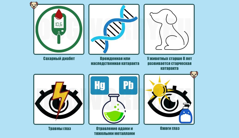 Причины патологии у животных