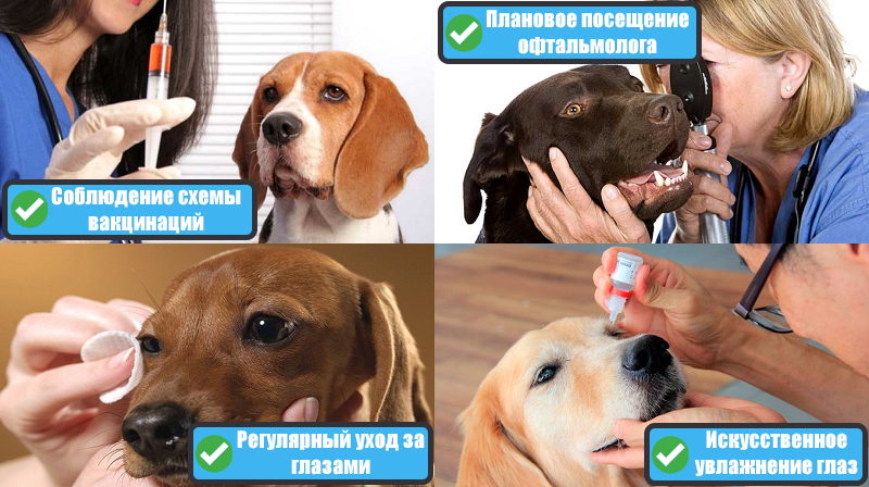 Профилактика патологии глаз у собак