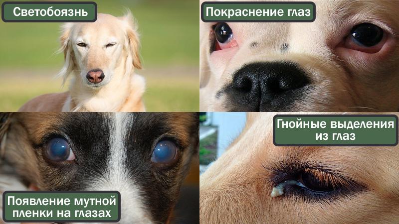 Симптомы болезни у собак