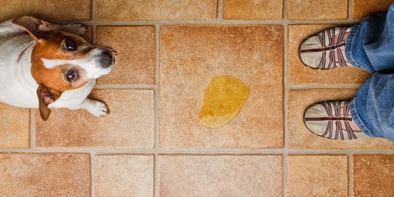 Симптомы цистита у собаки