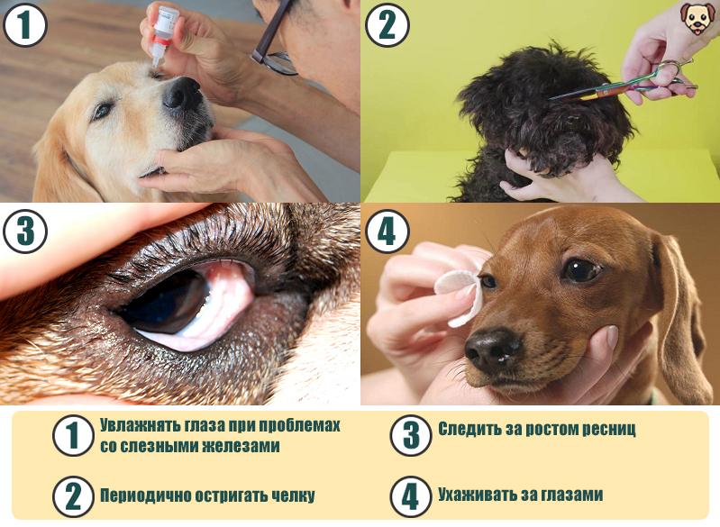Уход за глазами собак