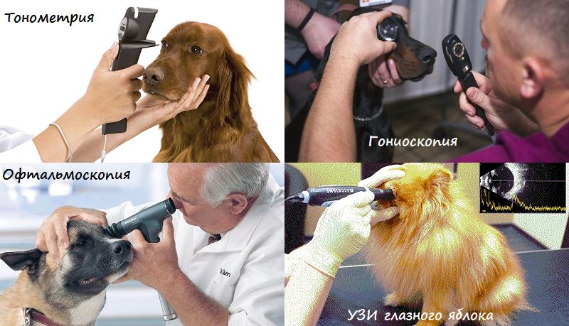 Диагностика глаукомы у собак