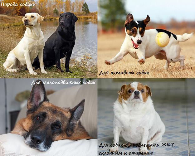 Как правильно выбрать хороший корм для собаки?
