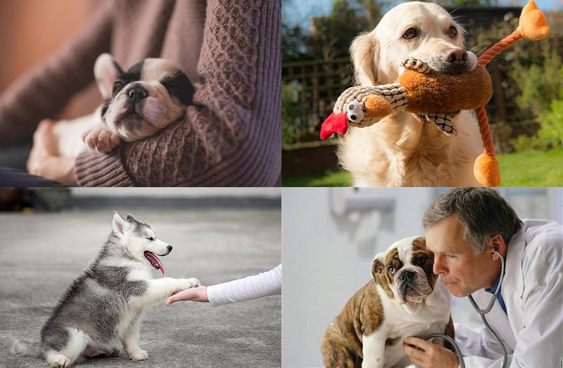 Как устранить скулеж собаки?