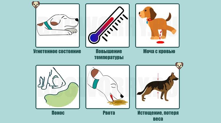 Когда нужно везти собаку к ветеринару?
