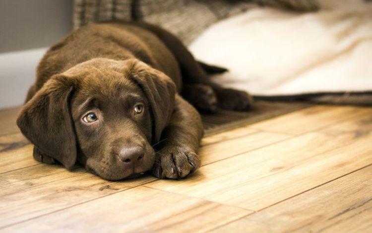 Может ли собака скулить без причины?