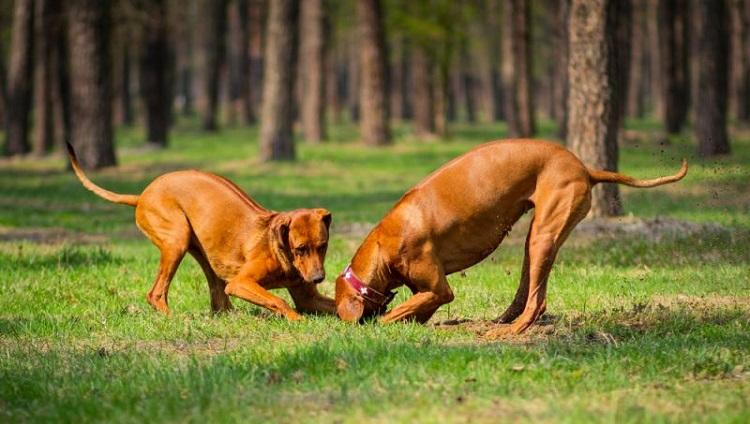 Почему собака роет ямы?