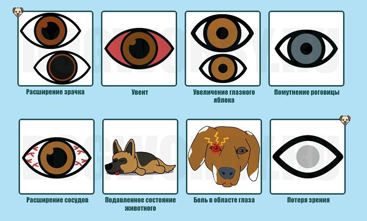 Симптомы болезни у животных
