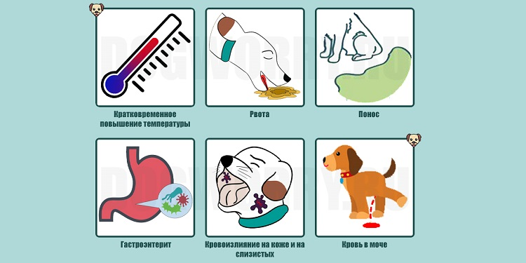 Симптомы геморрагической формы