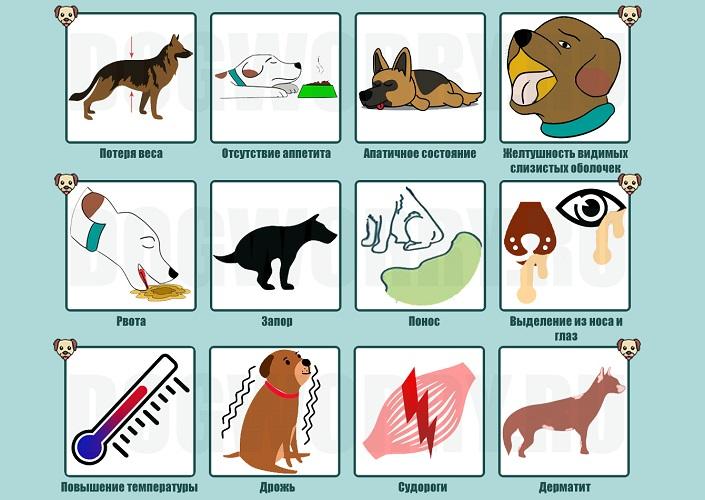 Симптомы токсоплазмоза у собак