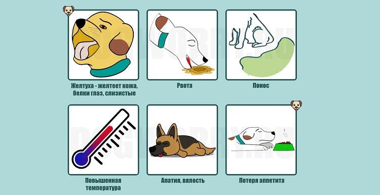 Симптомы желтушной формы