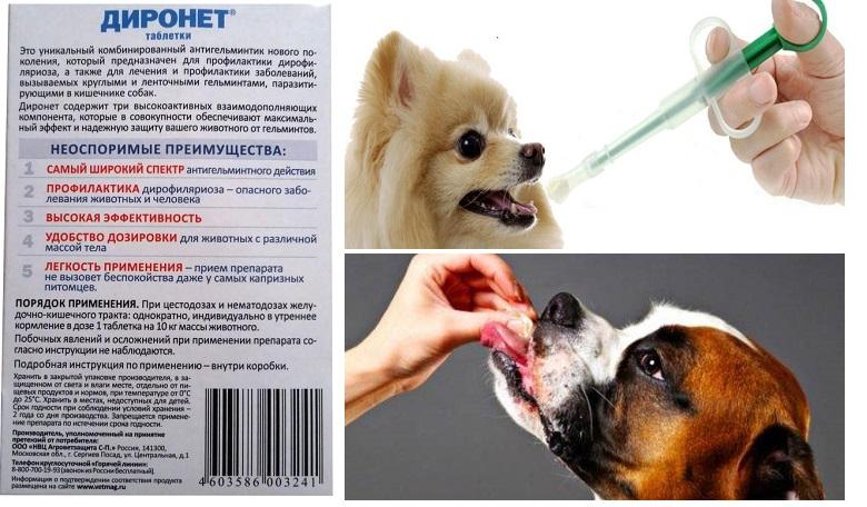 Таблетки для собак Диронет инструкция