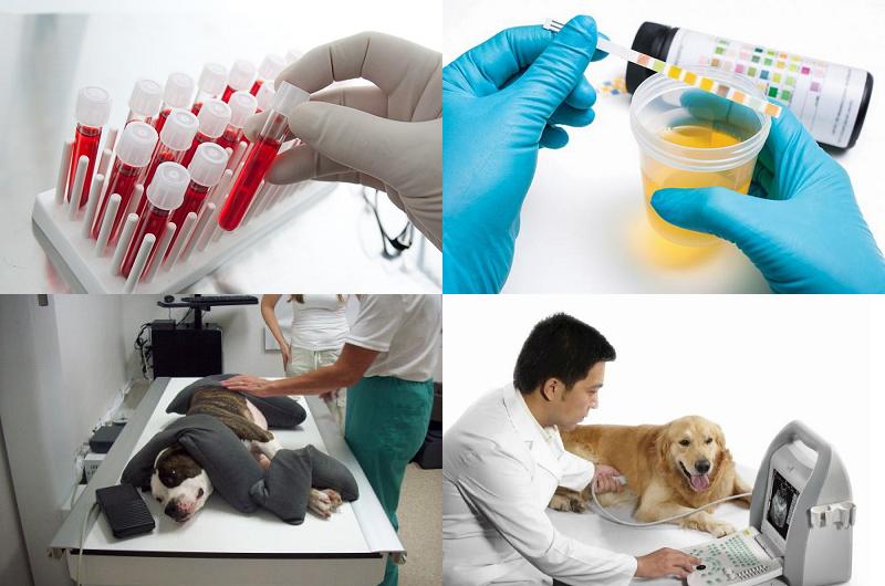 Как можно диагностировать болезнь Лайма у собаки?