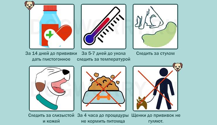 Как подготовить собаку к вакцинации?