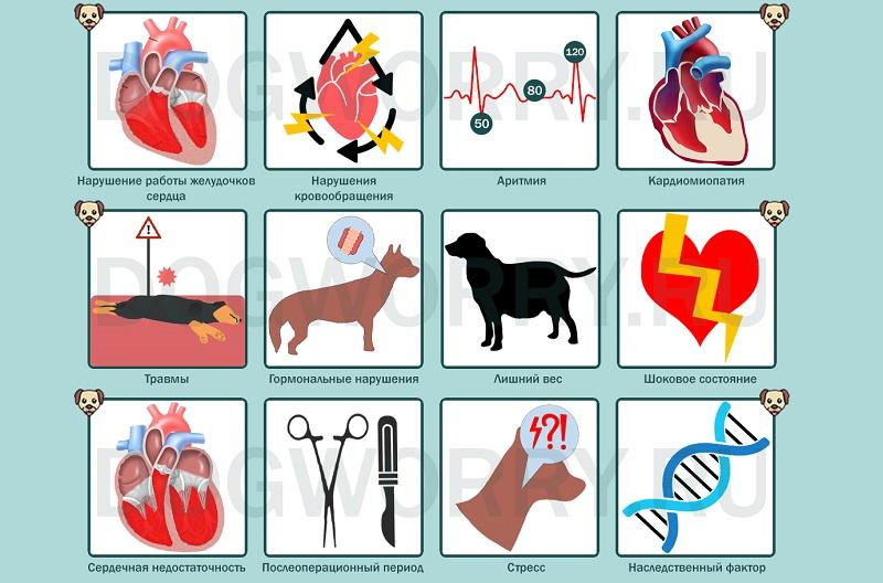По каким причинам у собаки может быть сердечный приступ?