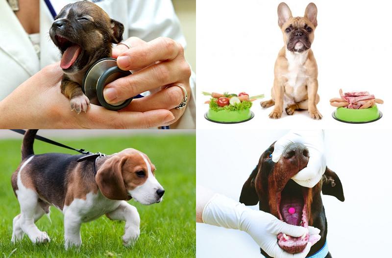 Профилактика сердечных болезней у собак