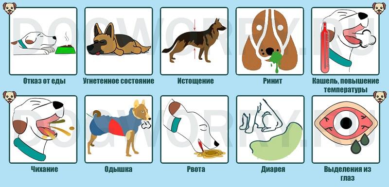 Симптомы бронхита у собак