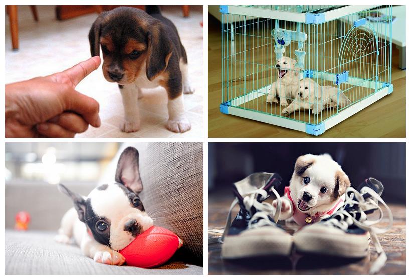 Как отучить щенка хватать хозяина за руки и ноги?