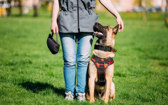 Как правильно выбрать тренера для обучения своей собаки?