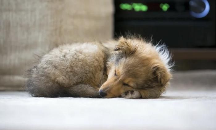 Почему собака крутится вокруг себя перед сном?