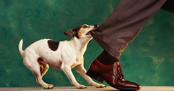 Почему взрослые собаки кусаются?
