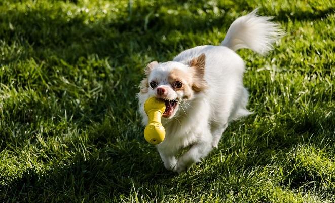 Поведение щенка