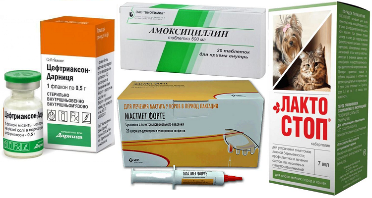 Препараты для лечения мастита у собак
